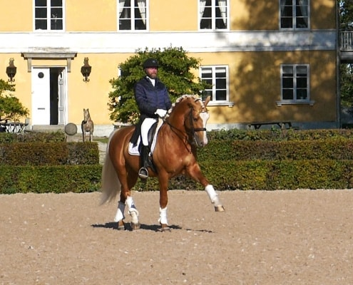 Zafferano stallion in sun